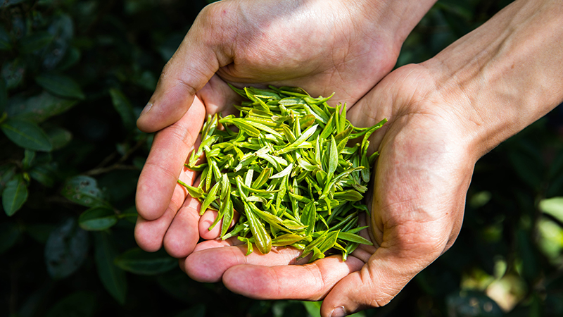 名优茶(绿茶)流水线